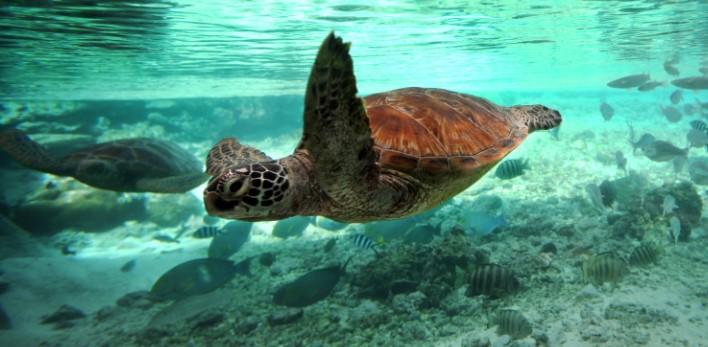 Bora Bora Turtle Sanctuary