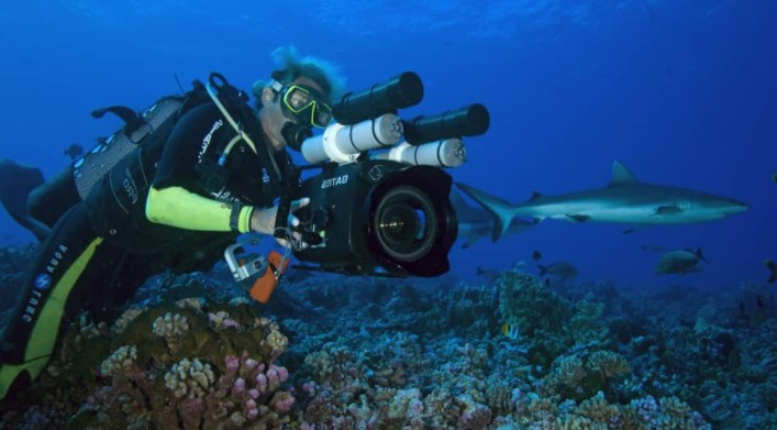 Diving companies