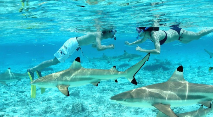 How to Swim with Sharks at Bora Bora