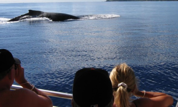 Watching Dolphin and Whale1