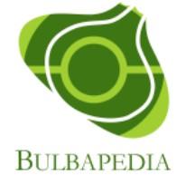 About Bulbapedia