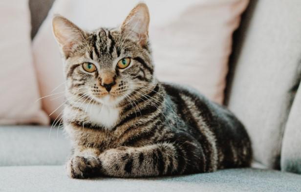 Bing Cat Quiz