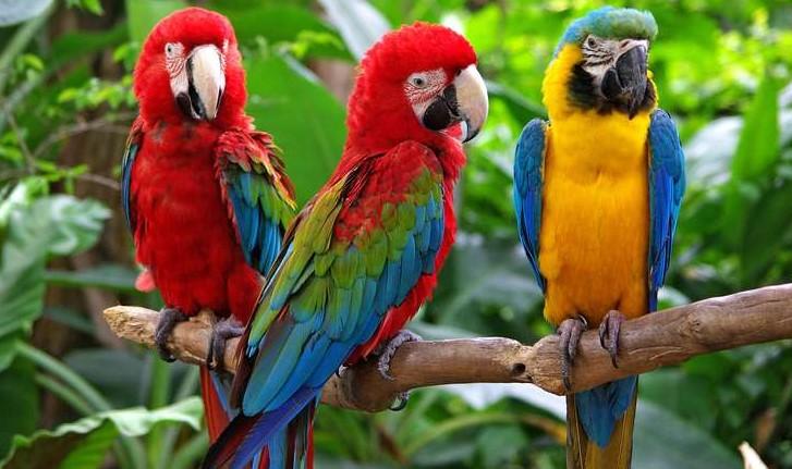 Bing Parrots Quiz1