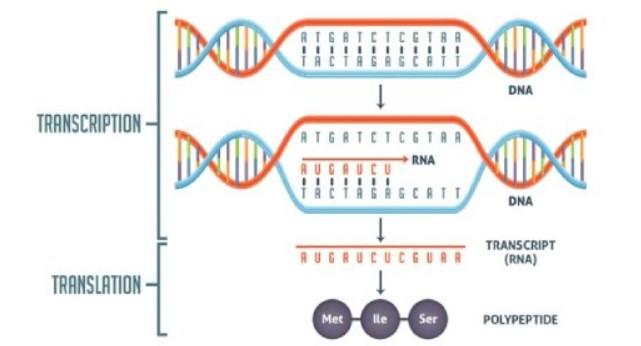 Bing Translation Quiz biology