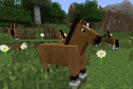Breeding Normal Horses for Jumping