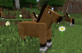 Normal Horses