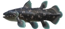 Coelacanth  Fish  Expensive ACNH