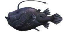 Football Fish Rare Fish ACNH