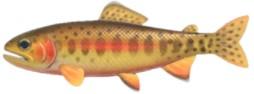 Golden Trout Rare Fish ACNH