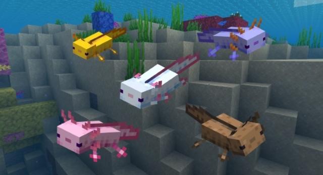 Axolotl colors